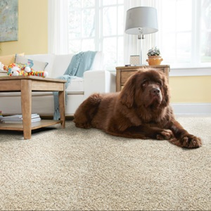Carpet Size