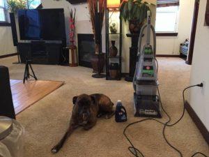 Hoover Carpet Cleaner Reviews