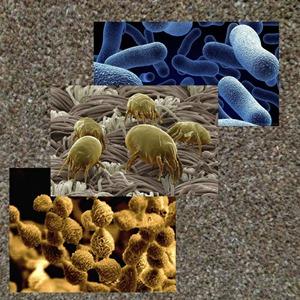 More Bacteria
